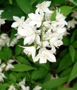 garden June 6-06 035 (1)